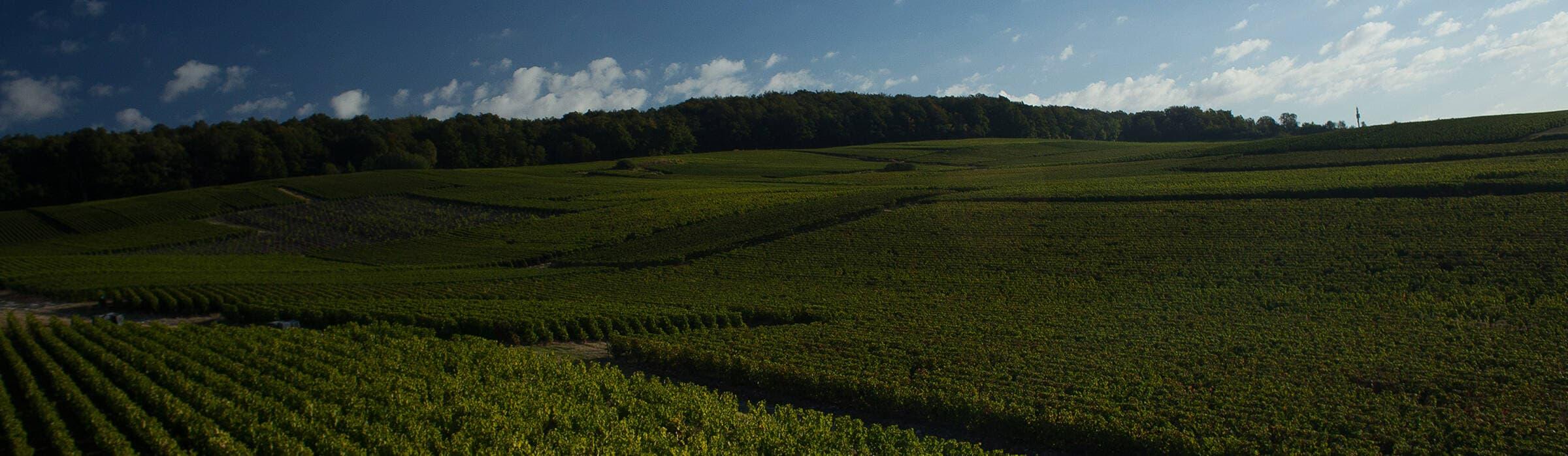 Veuve Clicquot - Os vinhedos