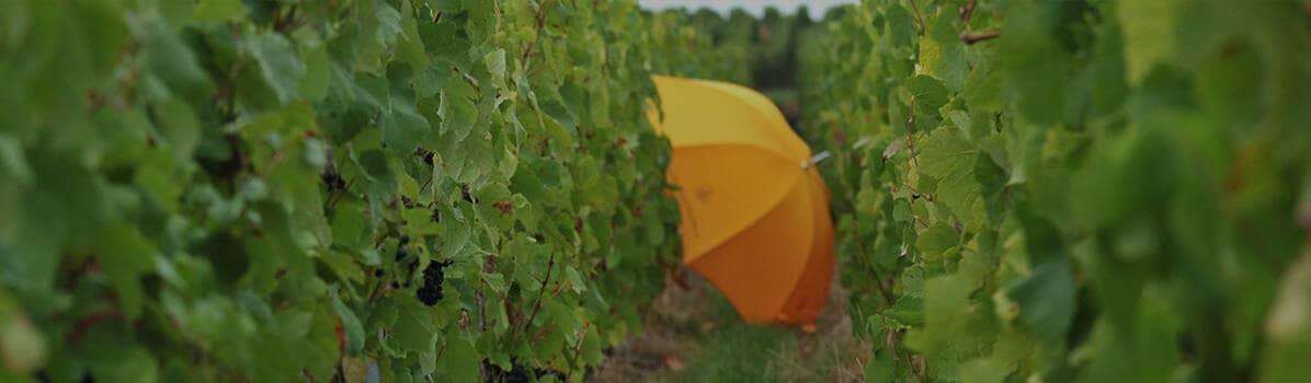 Cada paso del proceso de elaboración del vino es meticulosamente realizado para garantizar que el cultivo de la vid  cumpla con la máxima atención y que los procesos de producción tengan la mínima repercusión posible en términos de consumo, de emisiones yNUESTROS COMPROMISOS